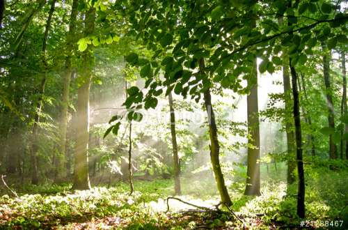 Fototapete Wald nach Maß